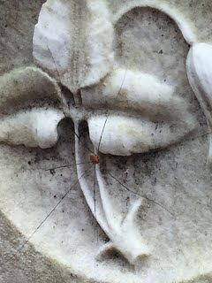 close up of trillium